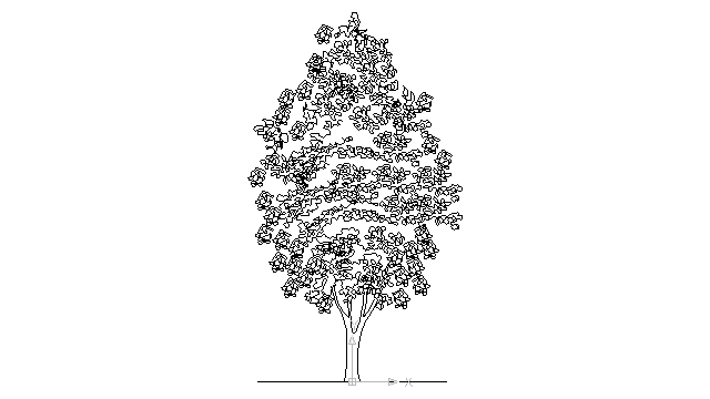 autocad drawing deciduous tree 2 in Garden & Landscaping, Trees