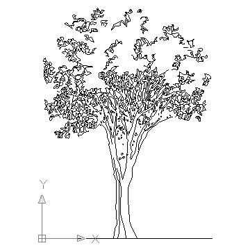 autocad drawing Ficus trees in Garden & Landscaping, Trees
