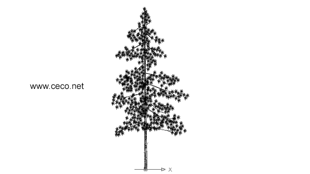 autocad drawing high coniferous pine tree in Garden & Landscaping, Trees