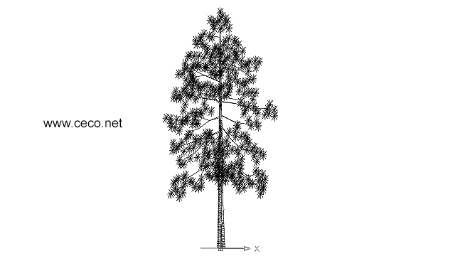 autocad drawing high pine conifer tree in Garden & Landscaping, Trees