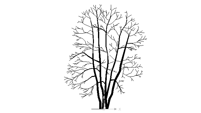 autocad drawing leafless tree in Garden and Landscaping, Trees