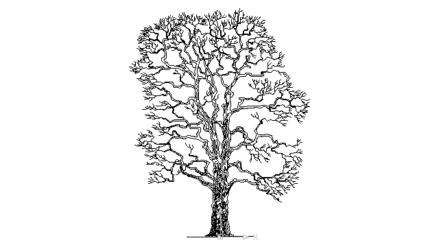 autocad drawing old tree without leaves trunk and branches leafless in Garden & Landscaping, Trees