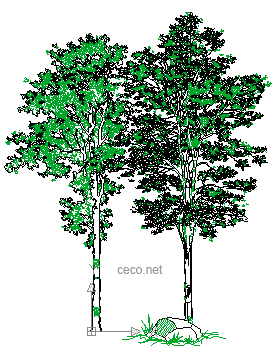 autocad drawing Pair of Trees with a big rock in Garden & Landscaping, Trees
