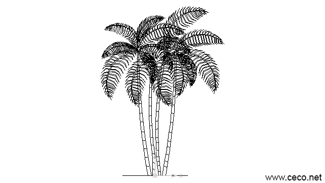 autocad drawing palm oil trees in Garden & Landscaping, Plants Bushes