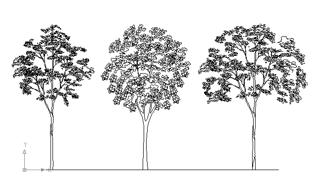 Autocad drawing three big trees in line in garden and landscaping trees