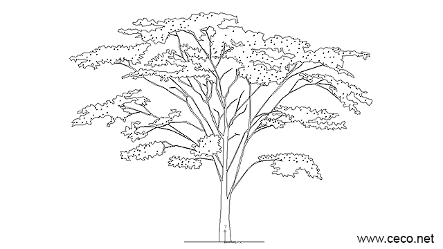 Autocad Drawing Tree With Foliage Fruits And Flowers Dwg