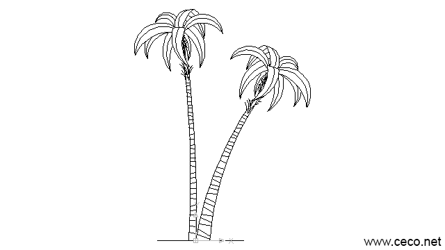 autocad drawing two palms in Garden & Landscaping, Plants Bushes